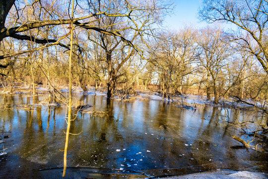 Auwald als natürlicher Hochwasserschutzraum an der Sieg bei Bonn