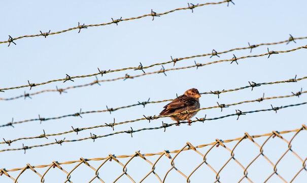 Pássaro em cerca