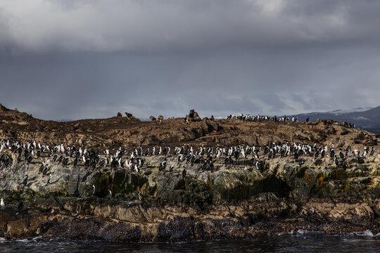 Argentina - Patagonia - Perito Moreno - Tierra del Fuego