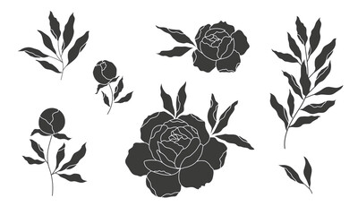 Obraz peony flower and leaves, vector silhouette, outline drawing - fototapety do salonu