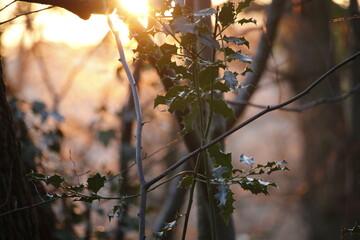 Foret près de Bordeaux, au coucher de soleil en automne