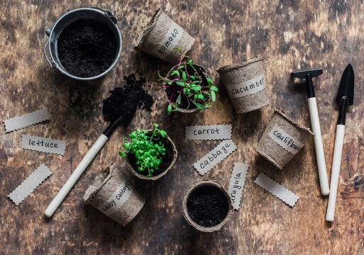 Gardening concept. Vegetable plant sprouts, pots, earth and gardening tools on a wooden background, top view