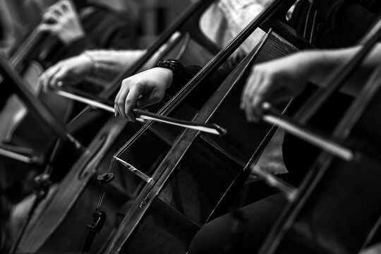Hands of a musician playing the cello in an orchestra in black and white