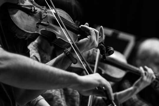 Violinist's hands in the orchestra in black and white