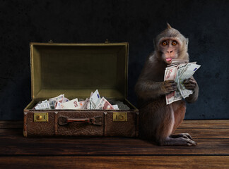 Intelligent clever monkey with money on hand and suitcase full of cash