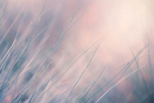 Wild grass in a forest at sunrise. Blurred abstract nature background.