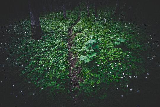 a path through a valley in spring