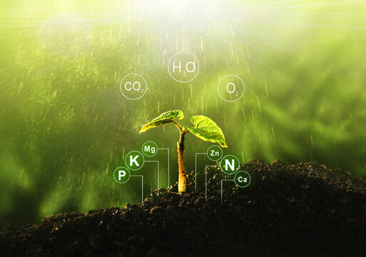 Fertilization and the role of nutrients in plant life with digital mineral nutrients. Seedlings are exuberant from abundant loamy soils.