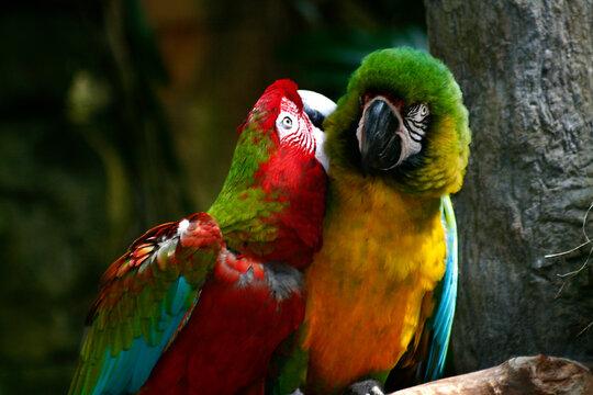 Macaws 04, Galveston, TX 2008