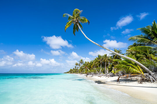 Beautiful tropical beach with hanging palm tree