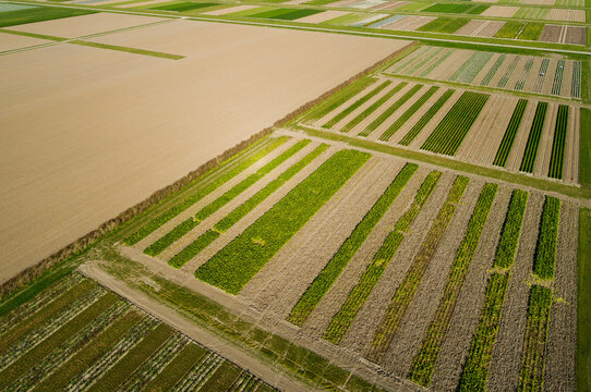 Experimental field for strip cultivation, a method to produce crops with less fertilizer and agricultural poison, and more biodiversity in the form of insects, Flevoland, Netherlands
