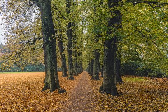 Germany, Hamburg, Blankenese, linden alley in autumn Hirschpark