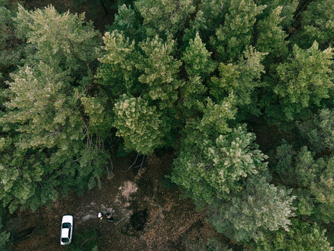 Aerial view of pne evergreen forest and white car. Camping on nature. Sustainable local travel. Restorative escape