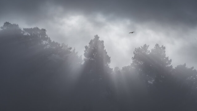 From below of bird soaring in cloudy sky over gloomy woods with tall trees on foggy day in Sierra de Guadarrama National Park