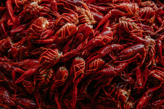 From above full frame background of pile of red shell covered freshwater or marine animal with claws