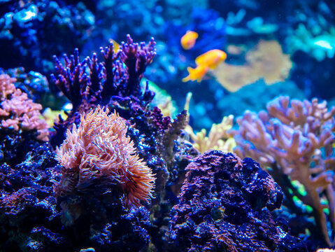 Corals and anemones with tropical fish in background