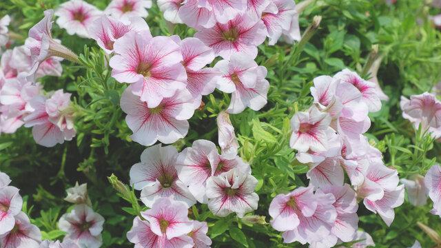 Beautiful flowers blooming in garden