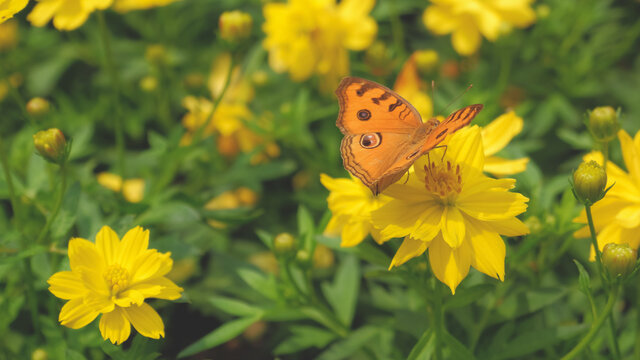 Butterfly pollinating flowers in the summer day, soft background
