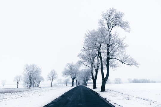 Melancholy view over the wintry, snow-covered land. Germany, State of Brandenburg, near Rheinsberg. A landscape without colors