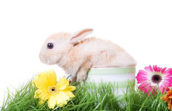 Ester Rabbit in green fresh meadow with flowers and grass.