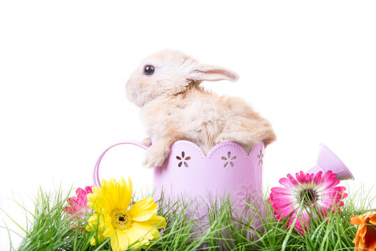 Bunny in springtime in cup with spring flowers and green grassland isolated on white background.