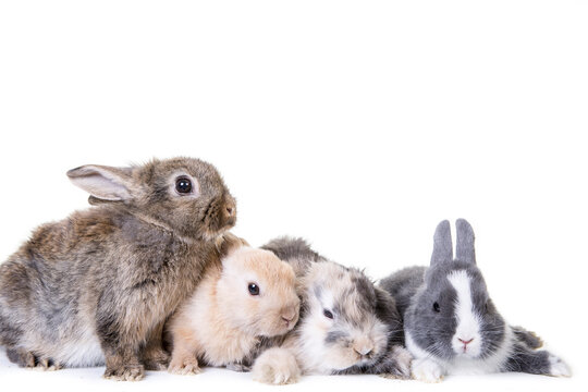 Various small,cute bunny children photographed in front of isolated studio background.