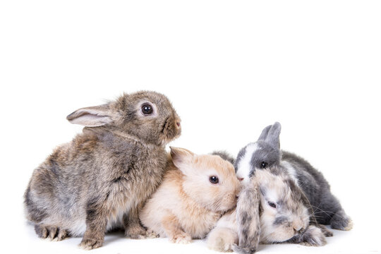 Group of cute bunny children photographed in front of isolated studio background.