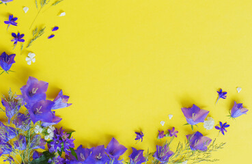 blue wild flowers on yellow background