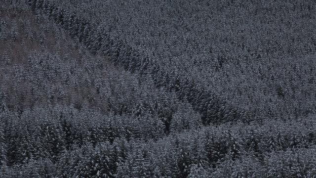 zimowo swierkowa mozaika