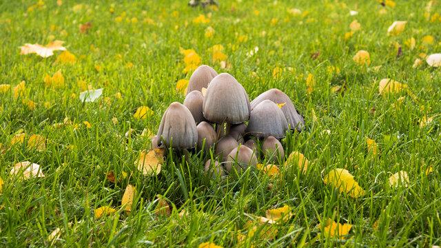 Bunch of mushrooms on grass
