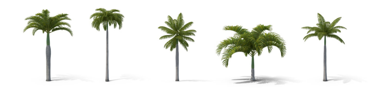 Group of isolated palm trees on white background,3d illustration.
