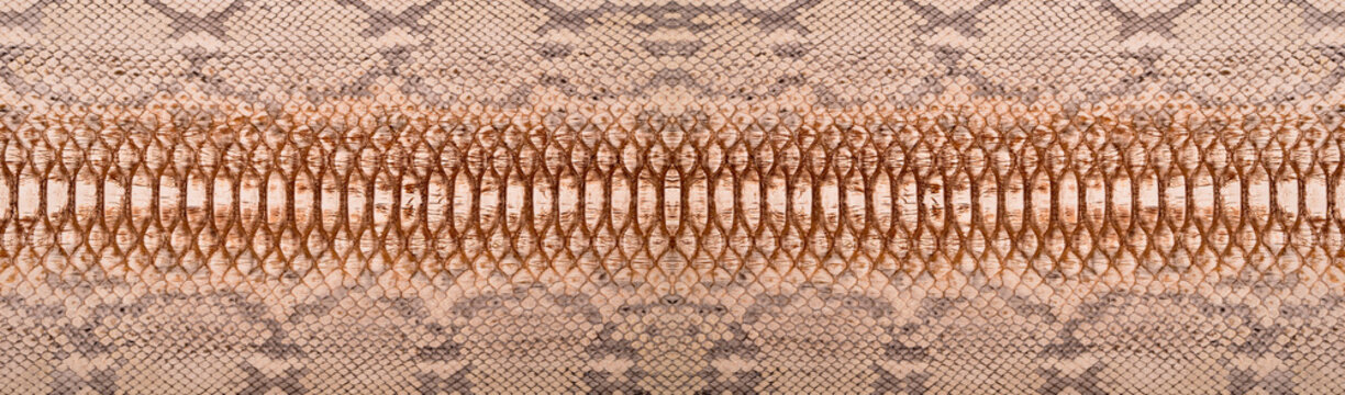 Natural snake skin is used for luxury clothes and accessories