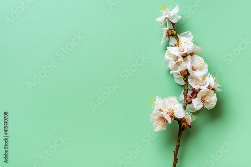 Sprigs of the apricot tree with flowers on green background. Place for text. The concept of spring came, mother's day, 8 march Top view. Flat lay Hello march, april, may