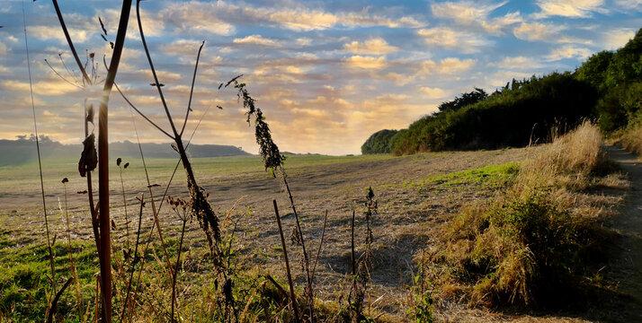 Idyllische Landschaft mit Feld, Wald und Himmel