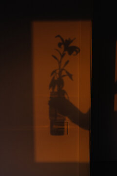 lily sunset shadow hand holding vase