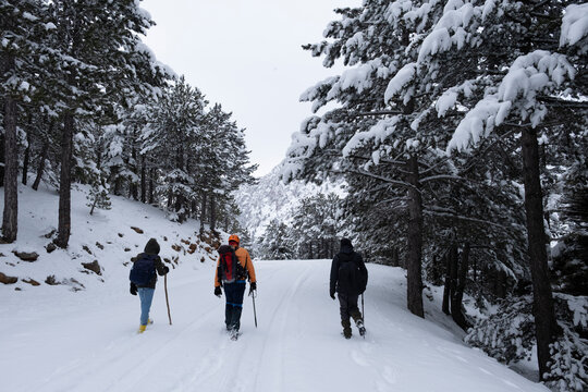 A group of friends walking together on a snowy day and the beauty of the therapeutic nature and snowy landscapes