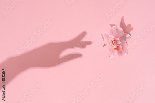 Womans hand shadow touches pink flower. Reach for the natural beauty. Womens, Mothers day, femininity concept.