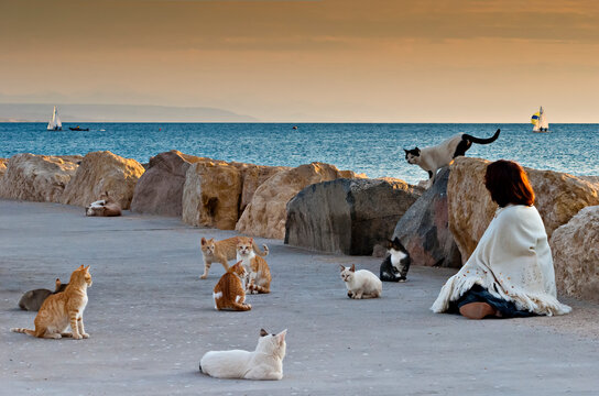 Scene on walking pier with cats and woman, Red sea, Middle East