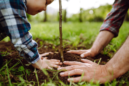 Planting a family tree. Hands of grandfather and little boy planting young tree in the garden. Environmental awareness. Spring concept, save nature and care.