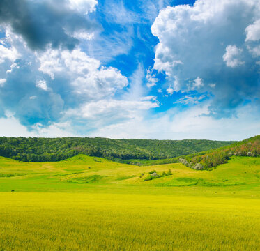 Wheat field and countryside scenery.