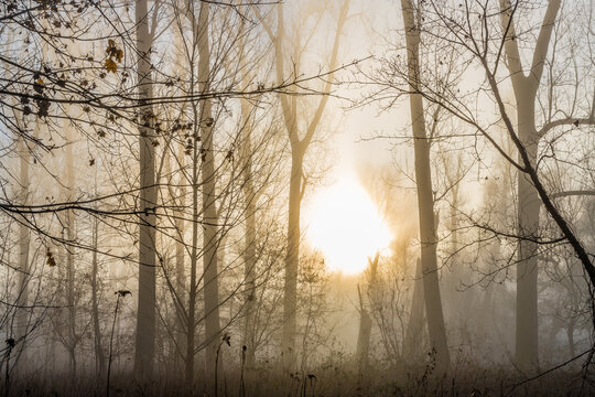Nebel im Wald bei Sonnenaufgang