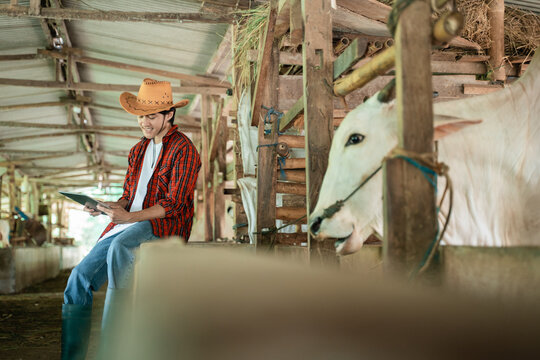 from side view of a farmer wearing casual clothes sitting near a wooden fence while using a digital tablet in the background of the cattle farm