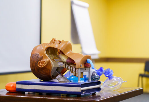 Medical simulation mannequin head used for practicing anesthetic techniques. Healthcare and education concept.