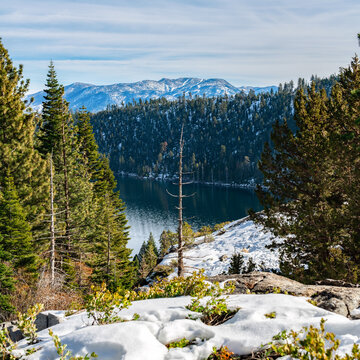 A winter image of a dead tree with Lake Tahoe and the Sierra Mountains in the background