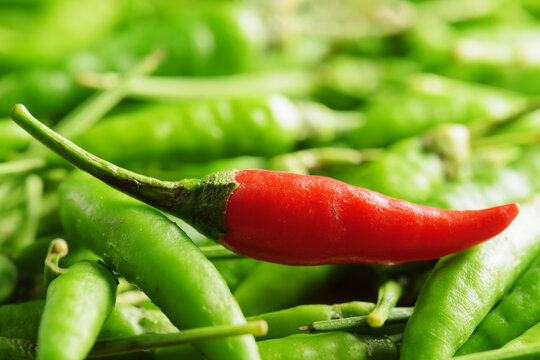 One red hot chili pepper among a lot of green peppers