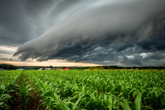 An ominous shelf cloud looms over a cornfield. Raleigh, North Carolina.