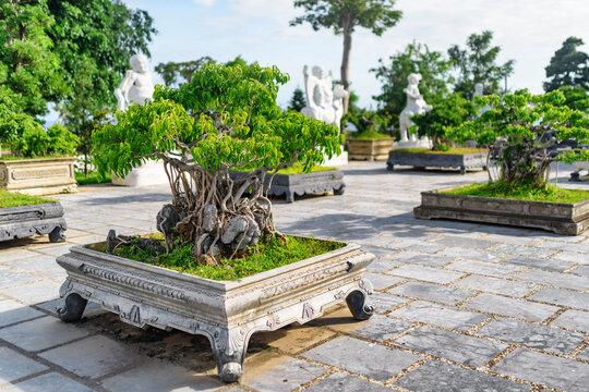 Green Bonsai trees growing at courtyard of the Linh Ung Pagoda