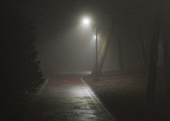 lantern lights on the road in the forest in the fog