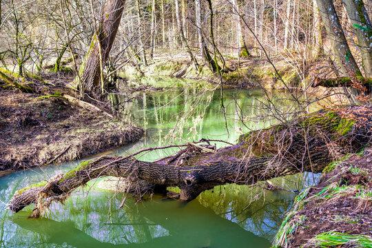 Mündungsbereich des Mehrbaches in die Wied