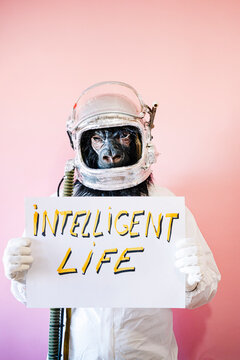 Man in gorilla mask and astronaut helmet holding a sign that says INTELLIGENT LIFE